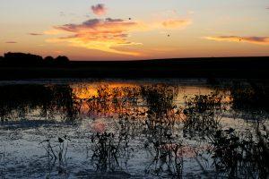 Basin Marsh