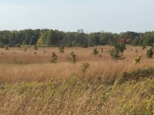 A Prairie at Fermilab